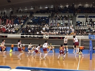 volleyball (6).jpg